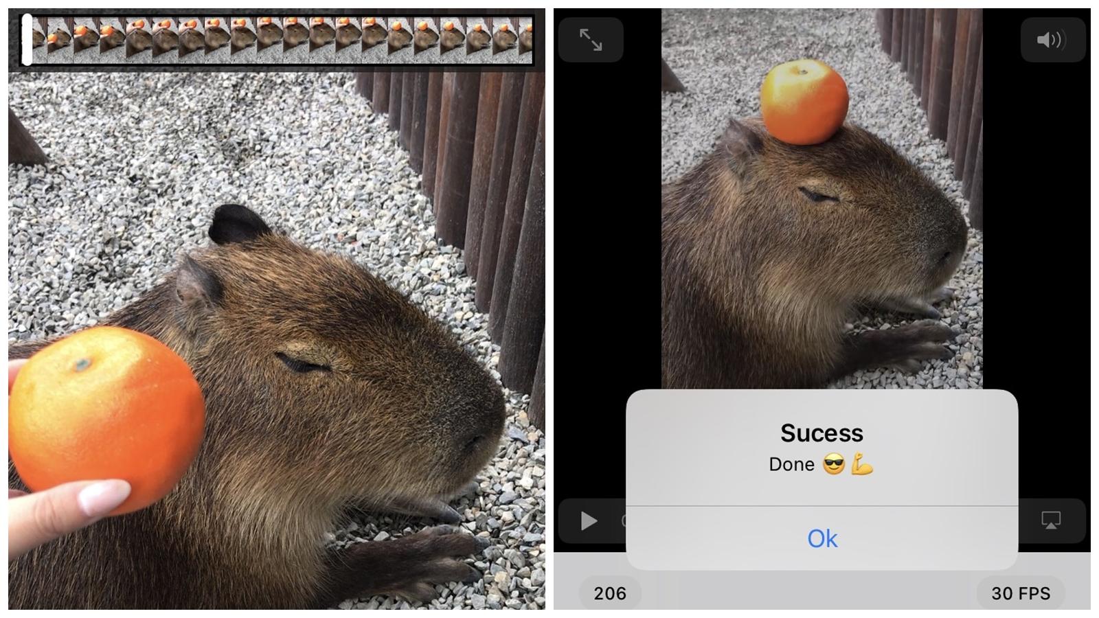 【手機專知】iPhone如何從影片截取高畫質照片?教你用方法搞定!