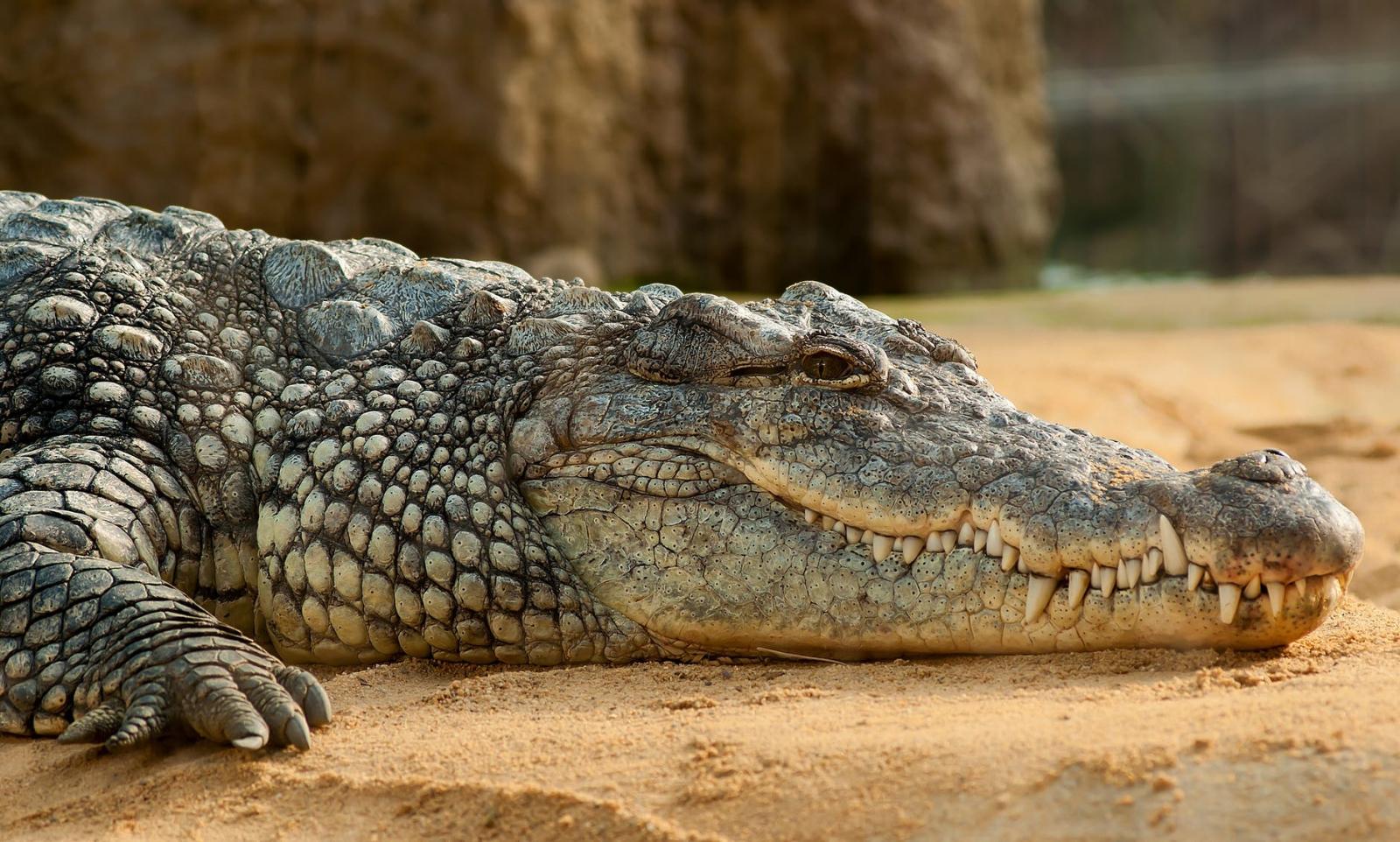 【理財專知】什麼是鱷魚指標?3分鐘學會用它判斷股票趨勢