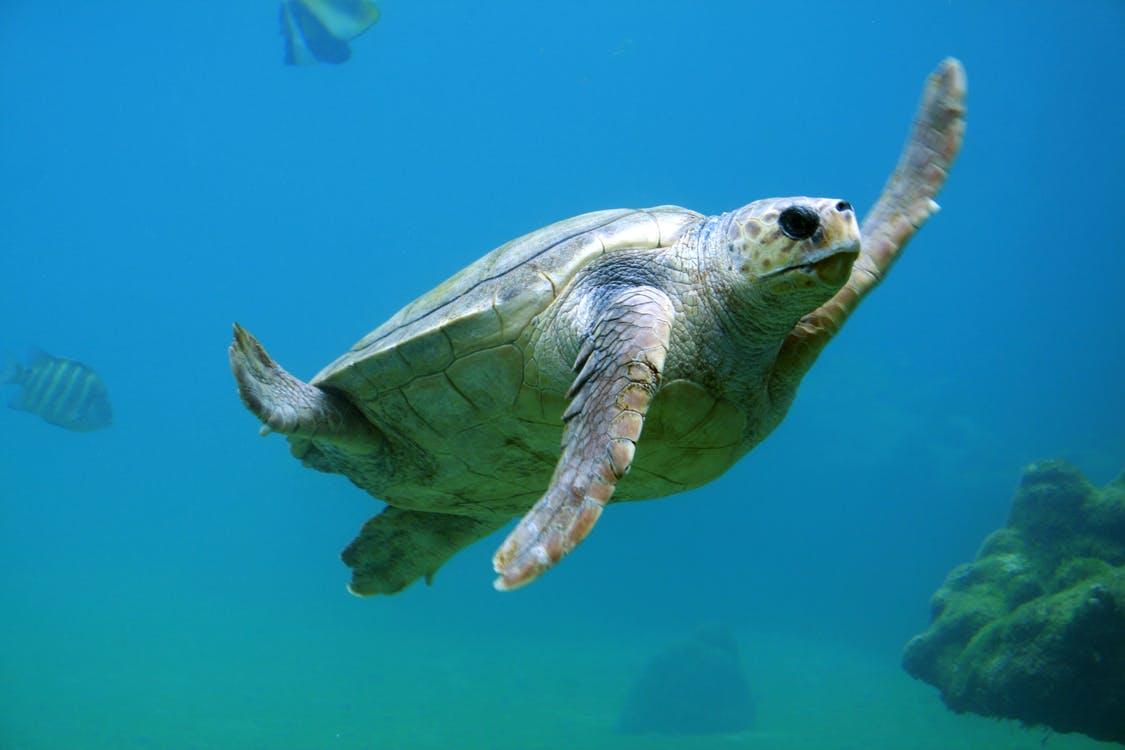 【理財專知】什麼是海龜交易法?他靠這本金狂翻10倍